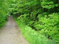 Vermont Woods 3