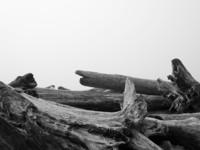 Kalaloch Driftwood