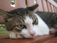 Cat at Punggol Park