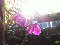 Moody Garden Orchids 7