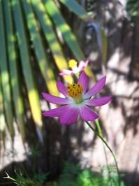 Belizian Flowers