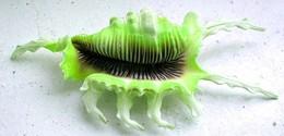 Green Scorpion Shell
