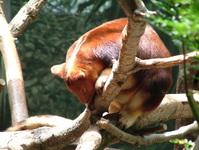 tree critter