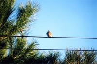 birds_ 1