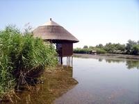 Danube delta 16