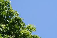 Leaves on a sky