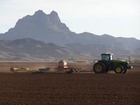 desert farms 1