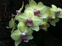 Moody Garden Orchids 1