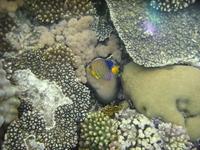 red sea underwater life 1 2