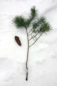 Simple Snow