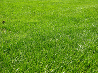 Grass 2