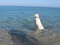 Ary on the beach