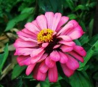 flower closeups 1