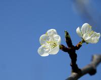 white flower in the sky