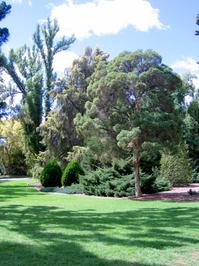Botanical Gardens- Wagga Wagga, Australia 2006