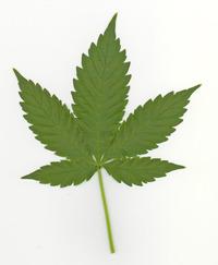 herb leaf