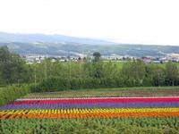 Hokkaido 33