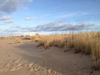 Dunes at Winter 3
