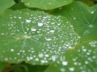 leaf, waterdrops