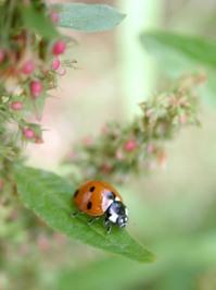 Bugs in the garden 1