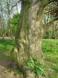 misc_tree 1