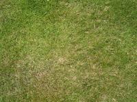 Well-kept lawn