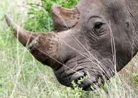 White Rhino Close-ups 5