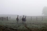 Llama in mist