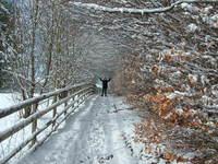 Winter Wonderland Walkway with