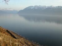 Lavaux vineyard, lake Geneva