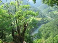 Tara, the river