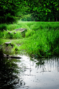 Swamp with decayed Bridge
