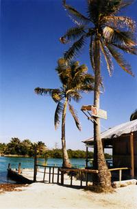 dock & palm trees