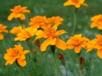 Flower .2