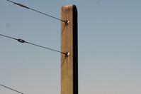 Urban Telephone Pole