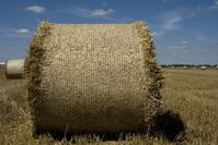 Harvest session::.. 5