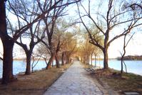 Peace Lake Path
