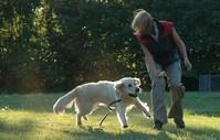 dog education 11