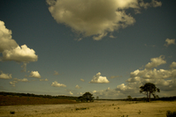 Heath landscape