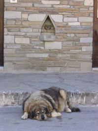 Dog on a street