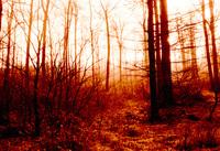 Taunus Forest 3