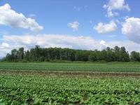 Farm Day 3