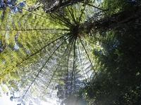 Ferns - nature's umbrella