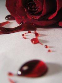bleeding roses 8