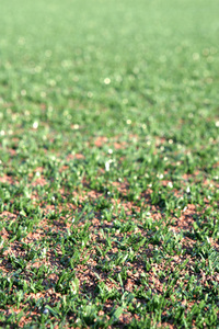 synt grass 1