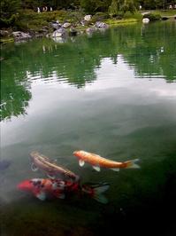 Fish Pond 4