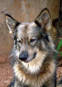 Sox my dog 1