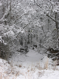Just Like Narnia