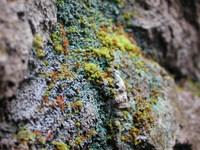 Moss World 4