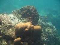 Underwater Love 2